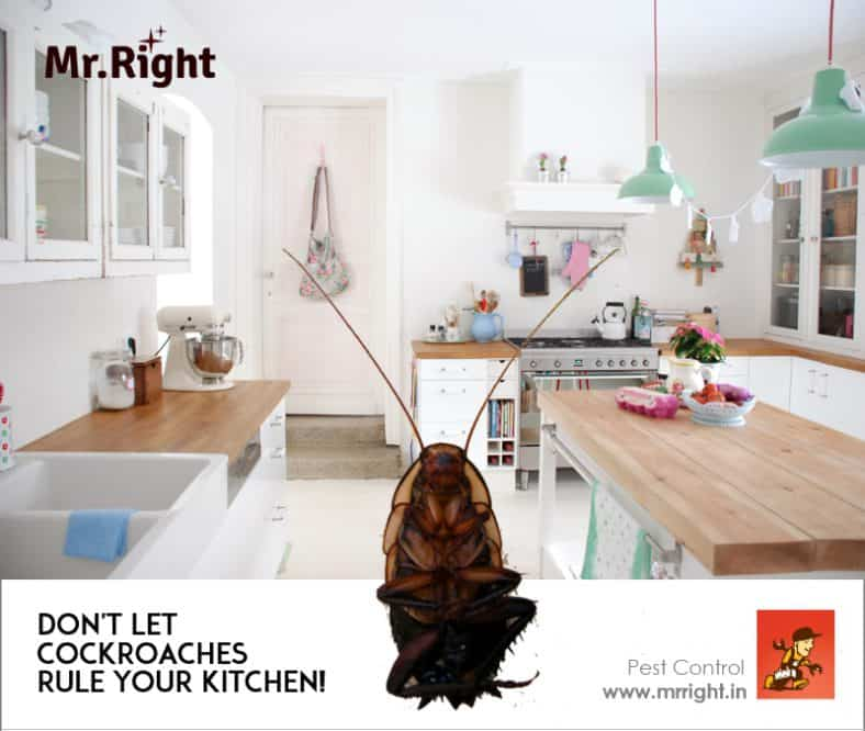 Pest Control in Kitchen | Delhi NCR, Noida, Gurgaon, Faridabad