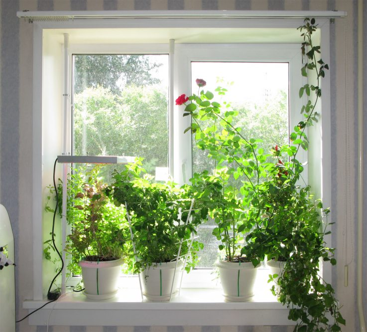 7 simple ways to maximize natural light in your home ideas by mr right - Houseplants thrive low light youre window sill ...