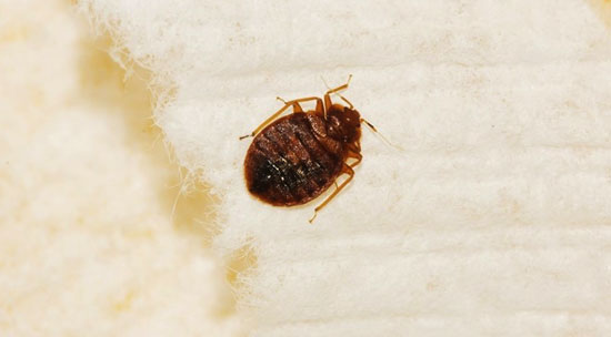 common myths and misconceptions about Pest Control