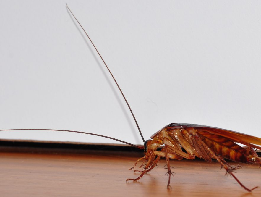 best ways to get rid of cockroaches