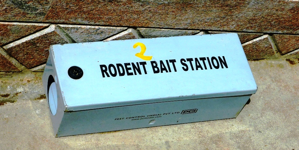 Use baiting and trapping to get rid of rats and rodents