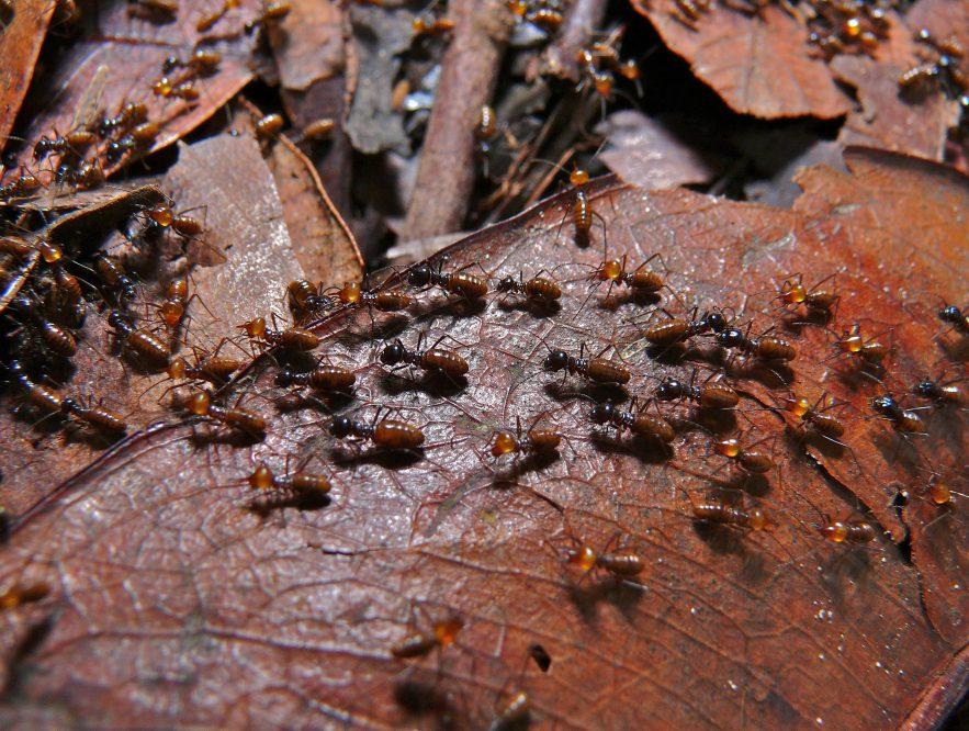 Keep termites away