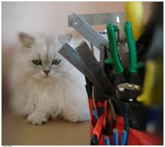 identify home repair dangers for pets