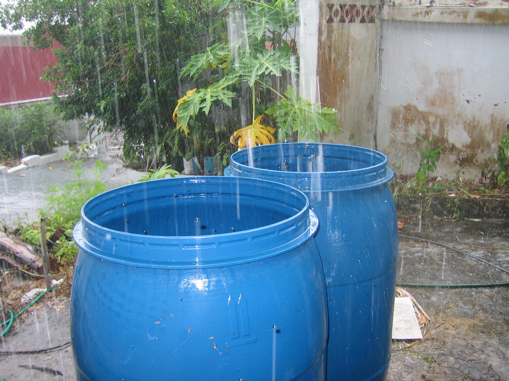 water collecting should be avoided to prevent dengue