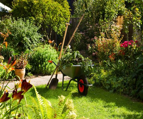Good Garden Care Tips