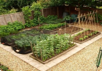 Allow space between the plants in your garden layout