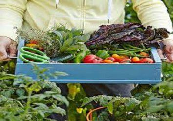 Benefits of having your own garden