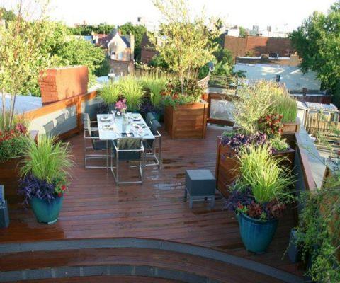 Terrace Garden Maintenance Tips