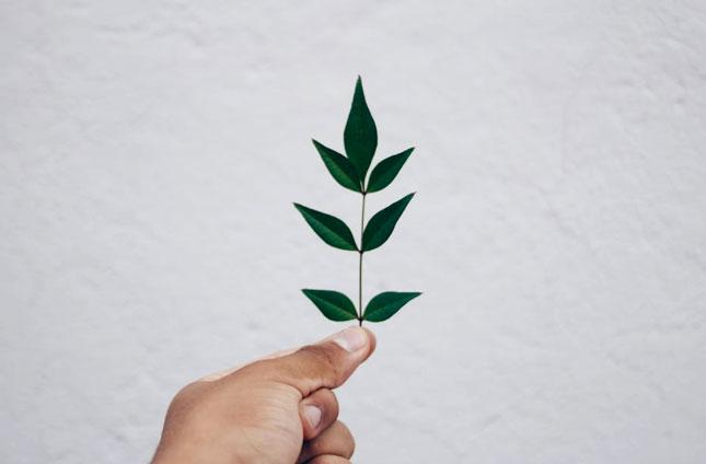 grow_vertical_garden